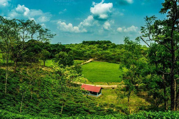 Kodala Tea Estate, Kaptai, Chittagong